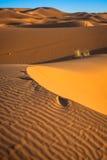 Abandonnez la dune à l'erg Chebbi près de Merzouga au Maroc Images stock