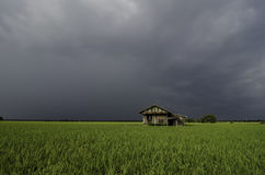 Abandonnez la maison en bois au milieu de la rizière avec le fond dramatique de nuage Image stock