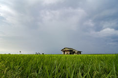Abandonnez la maison en bois entourée par la rizière verte au-dessus du fond dramatique de nuage Photos libres de droits