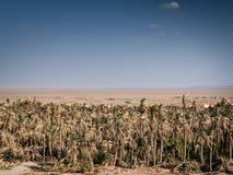 Abandonnez la vue de paysage dans l'oasis Iran du sud de garmeh Photo stock