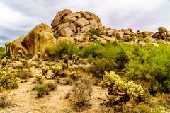 Abandonnez le paysage avec des rochers avec le Saguaro et les cactus de Cholla Image stock
