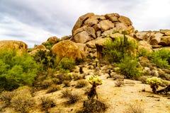 Abandonnez le paysage avec des rochers avec le Saguaro et les cactus de Cholla Photos libres de droits