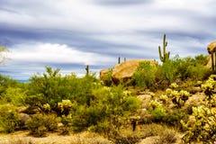 Abandonnez le paysage avec des rochers avec le Saguaro et les cactus de Cholla Image libre de droits