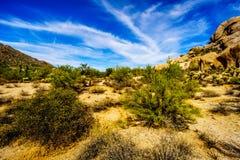 Abandonnez le paysage avec des rochers avec le Saguaro et les cactus de Cholla Images stock