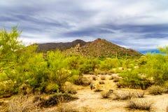 Abandonnez le paysage avec des rochers avec le Saguaro et les cactus de Cholla avec la montagne noire à l'arrière-plan Image libre de droits