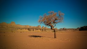 Abandonnez le paysage avec l'acacia en vallée de Naga de Moul à en le parc national de nAjjer de Tassili en Algérie Images libres de droits