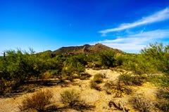 Abandonnez le paysage avec les arbustes, le Saguaro et les cactus de Cholla Images stock