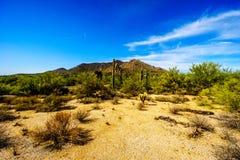 Abandonnez le paysage avec les rochers, le Saguaro et les cactus de Cholla Photos libres de droits