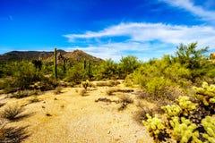 Abandonnez le paysage avec les rochers, le Saguaro et les cactus de Cholla Images libres de droits