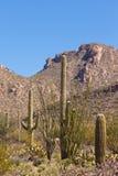 Abandonnez le paysage du Saguaro NP près de Tucson AZ USA Images stock