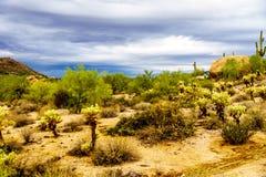 Abandonnez le paysage et les montagnes rocailleuses dans la réserve forestière de Tonto en Arizona, Etats-Unis Photos stock