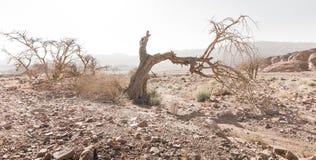 Abandonnez le paysage mort sec d'arête de montagnes de pierre de branche d'arbre Images stock