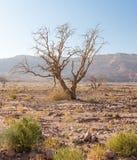 Abandonnez le paysage mort sec d'arête de montagnes de pierre de branche d'arbres Photographie stock libre de droits