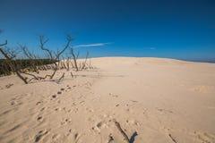 Abandonnez le paysage, parc national de Slowinski près de Leba, Pologne Photographie stock libre de droits