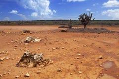 Abandonnez le paysage sur la plaine de Hato, Curaçao Photographie stock
