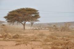 Abandonnez le sol sec arénacé, quelques plantes vertes sur le sol de désert et les animaux images libres de droits