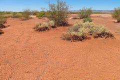 Abandonnez le sol sec rouge, plantes vertes sur le sol de désert Photographie stock libre de droits