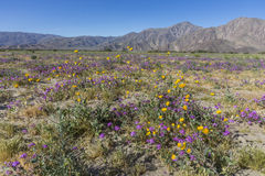 Abandonnez le tournesol de Cinq-tache et de désert fleurissant en Californie D Photos libres de droits
