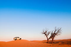 Abandonnez le voyage, safari de désert, arbre mort Images stock