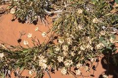Abandonnez les fleurs, voûtes parc national, Utah Photographie stock libre de droits