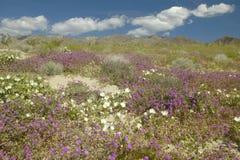 Abandonnez les lis et les fleurs blanches Photo stock