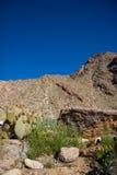 Abandonnez les montagnes avec le cactus Images libres de droits