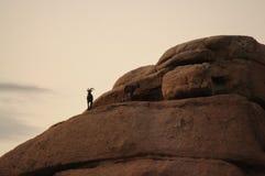 Abandonnez les mouflons d'Amérique se tenant sur une roche à l'aube Image stock