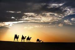 Abandonnez les promenades locales avec le chameau par le désert de Thar Images stock