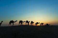 Abandonnez les promenades locales avec le chameau par le désert de Thar Photos stock
