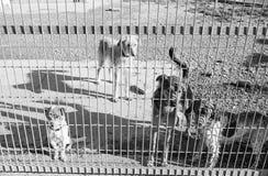 Abandono bloqueado del perro Imagen de archivo