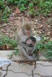 Abarcamiento del mono de la madre Imagen de archivo libre de regalías