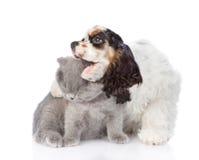 Abarcamiento del perrito de cocker spaniel y gatito joven penetrante Aislado Fotos de archivo