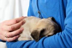 Abarcamiento del perrito recién nacido del barro amasado Imágenes de archivo libres de regalías