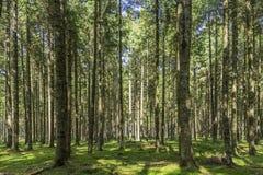 Abarcamiento por un bosque de la naturaleza Imagen de archivo