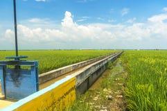 Abastecimiento de agua del arroz Fotografía de archivo libre de regalías