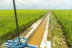 Abastecimiento de agua del arroz Foto de archivo