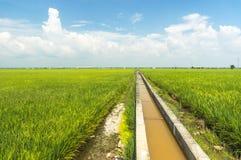 Abastecimiento de agua del arroz Imagen de archivo
