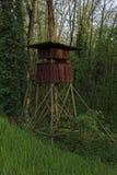 Abat-jour augmentés dans la forêt Image stock