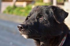 Abat-jour de chien noir image libre de droits