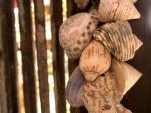 Abat-jour de coquilles sur en bois Image stock