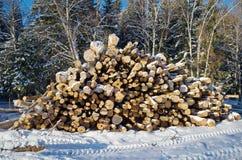 Abatido entra uma floresta Imagem de Stock