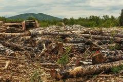 Abattage d'arbres d'automne Photographie stock