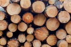 Abattage d'arbres d'industrie de sylviculture photo libre de droits