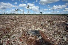 Abattage de forêt de destruction de forêt normale, nort Image libre de droits