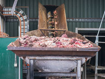 Abattoir byproducts for processing. Byproducts from a sheep abattoir in the input bin of a meat and bone rendering plant for processing to meat and bone meal, a royalty free stock photos