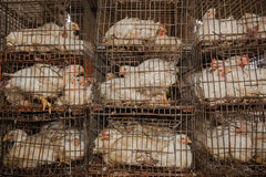 Abattoir de cages de poulets Photos stock