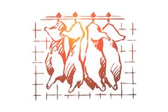 Abattoir, meat cutting, chopped pork, cattle carcasses hanging in freezer, refrigerator, raw, uncooked product. Butchery storage, slaughterhouse concept sketch vector illustration