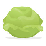 Сabbage. Vector illustration: green cartoon cabbage Stock Images