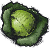Сabbage. Head of green cabbage. Isolated, vector Royalty Free Illustration