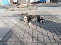 Abbaino del gatto Fotografia Stock